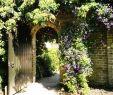 Rostartikel Für Garten Einzigartig Kletterpflanzen Für Kleine Gärten