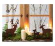 Rostige Flammen Inspirierend Die 779 Besten Bilder Von Weihnachtsdeko