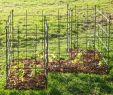 Rostige Schilder Luxus Rankgitter Für Kletterpflanzen Frucht Oder Obststräucher