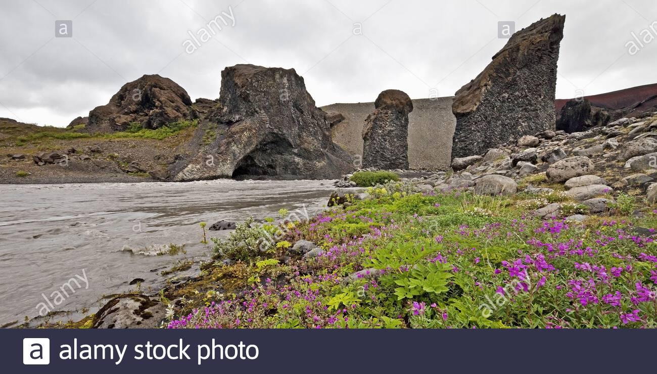 bluhende wildblumen vor troellahellir karl od kerling island europa 2adajax