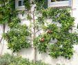 Rostkunst Für Den Garten Schön Gartengestaltung Ideen 40 Kreative Vorschläge Für Den