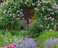 Schöne Gärten Gestalten Elegant Rosengarten Gestalten Und Anlegen Mein Schöner Garten