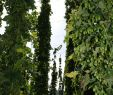 Schöne Kleine Gärten Schön 36 Schön Gartengestaltung Kleine Gärten Genial