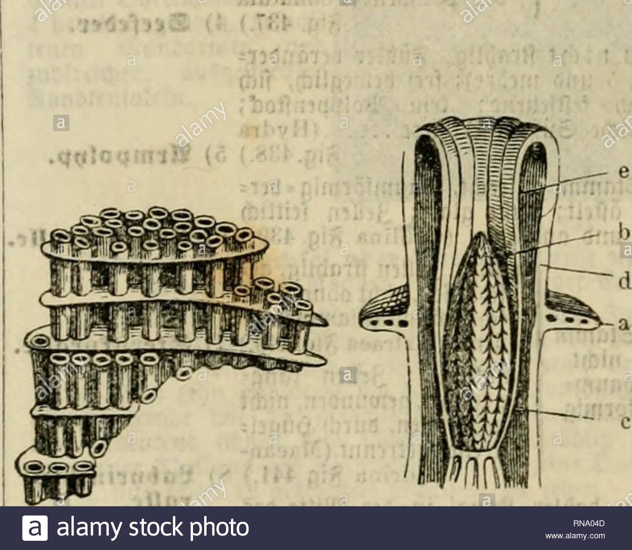 analytischer leitfaden fr den ersten wissenschaftlichen unterricht in der naturgeschichte animals 182 9taturgefciiftc be6 2jicrreit 8 3ooiogie sdleere dltfe nie alle ctinicn tjobcn eint grogc slejirobuctionfraft unb jflanen fld burcf gier fort ficrflrfe ffnen flct in beii liulagcn unb bie eier tnerben bann bufct bcn sbunb aiiagenjorfen ssiele arten tabcn einen auf bcr ampaut reiincn erregcnben ober ncffe nben scfjleim tnie mandje sjiebufen 2 cfncrfenufig 236 6 proffcnbe 2ugenforoe ocullna prolifra ig 439 sbci beutlid gabelartig RNA04D
