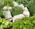 Schrebergarten Gestaltungsideen Elegant Grüner Daumen Die Würze Für Ihren Garten Kräuterbeet
