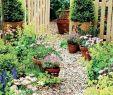 Schrebergarten Gestaltungsideen Inspirierend Die 1036 Besten Bilder Von Garten In 2020