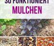 Schrebergarten Gestaltungsideen Neu Die 76 Besten Bilder Von Gemüsegarten