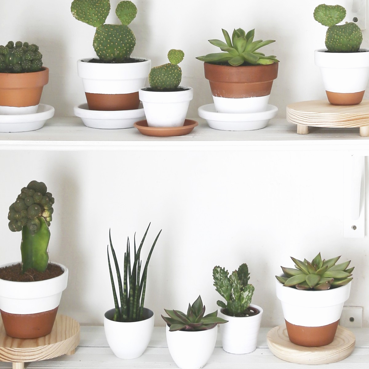 succulent garden design elegant how to grow more succulents without spending a dime of succulent garden design