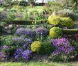 Schrebergarten Ideen Frisch 42 Elegant Succulent Garden Design Alexstand