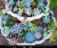 Schrebergarten Ideen Neu 42 Elegant Succulent Garden Design Alexstand