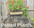Shabby Gartendeko Frisch Container Gardening with Fun Planters to Suit Your Style