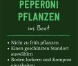 Sichtschutz Beet Elegant Peperoni Pflanzen Standort Ansprüche & Vorgehen
