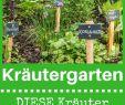 Sichtschutz Beet Frisch Kräutergarten Anlegen Anlegen Kräutergarten