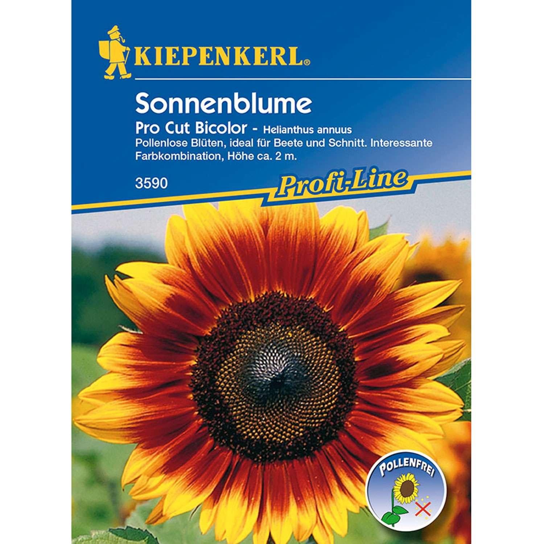1 Sonnenblume Pro Cut Bicolor Helianthus annuus 1280x1280 2x