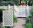 Sichtschutz Kleiner Garten Neu Rankgitter Sichtschutz