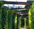 Sitzecke Garten Modern Inspirierend ПергоРы Ручшие изображения 352 в 2020 г