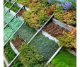 Solar Deko Garten Elegant Грядки кРумбы на скРоне
