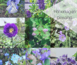 Stauden Garten Schön 9 & Mehr Blaue Stauden – Blaues Wunder Im Garten Auf 850 Hm