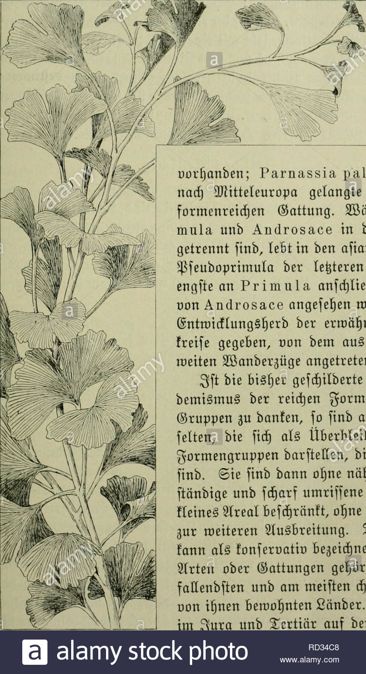das leben der pflanze plants plants plants phytogeography fonferuaticr snbeniisnuti 141 fid bei uiclen kattuns gen soiftbasberiujnitc belraet ber europi= fencbirgeleonto= 0 1 i u m a 1 p i n u m fier one nhere 3ser= rcanbte in ben a aiu fden ebtrgen tft eine grere al uon strien uifjanben parnassia palustris i t bie einjige bi nad 3jitteieuropa gclongte strt ber in lt0ocafien fo formcnreicen sattung 2f3renb bie gattungen pri mula unb androsace in ben sjebirgen uropa gut rennt finb lebt in ben afiati cen ebirgen bie eftion pfeuboprimul RD34C8