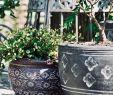 Steinfiguren Garten Einzigartig Handgefertigt In Thailand Wer Spaß An Gärtnern Und