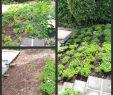 Steingarten Anlegen Schön Garden Walkways Unique 20 Best Hangbefestigung Steine Ideas