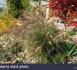 Steingarten Bilder Schön Japanischer Faecherahorn Stock S & Japanischer