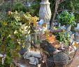 Steingarten Deko Inspirierend Genießt Es Einfach