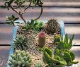 Steingarten Deko Inspirierend Pin Von Carmen Marut Auf Blumengestecke