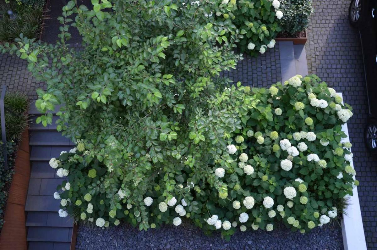 Garten von Ehren Vorgarten C Draufsicht 1707 1200x1200