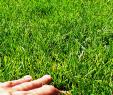 Steingarten Genial Как создать аккуратненький травинка к травинке зеРеный