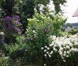 Sträucher Für Den Garten Frisch 12 Kostengünstige Landschaftsgestaltung Ideen Für Den