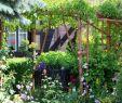 Sträucher Für Den Garten Genial Schönheit Sträucher Für Den Garten Doppel Lila Pfingstrose