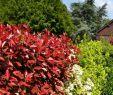 Sträucher Für Den Garten Neu Schönheit Sträucher Für Den Garten Doppel Lila Pfingstrose