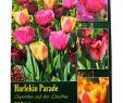 Teich Deko Inspirierend Harlekin Parade Tulpenmischung
