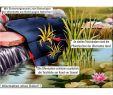 Teich Deko Schön Ufermatte 110 X 105 Cm Mit 17 Pflanztaschen Für Gartenteich Mit Befestigung