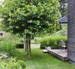 Terrasse Beet Gestalten Elegant Artigegarten sommergarten Mit Schatten Von Platanen