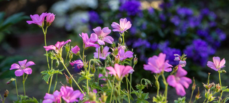 Blumenbeet anlegen 18 1500x680