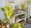 Terrasse Mit Blumen Gestalten Genial Die 112 Besten Bilder Von Terrassen Gestaltung I Veranda In