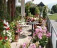 Terrassenbepflanzung Bilder Schön Pfle Ipps