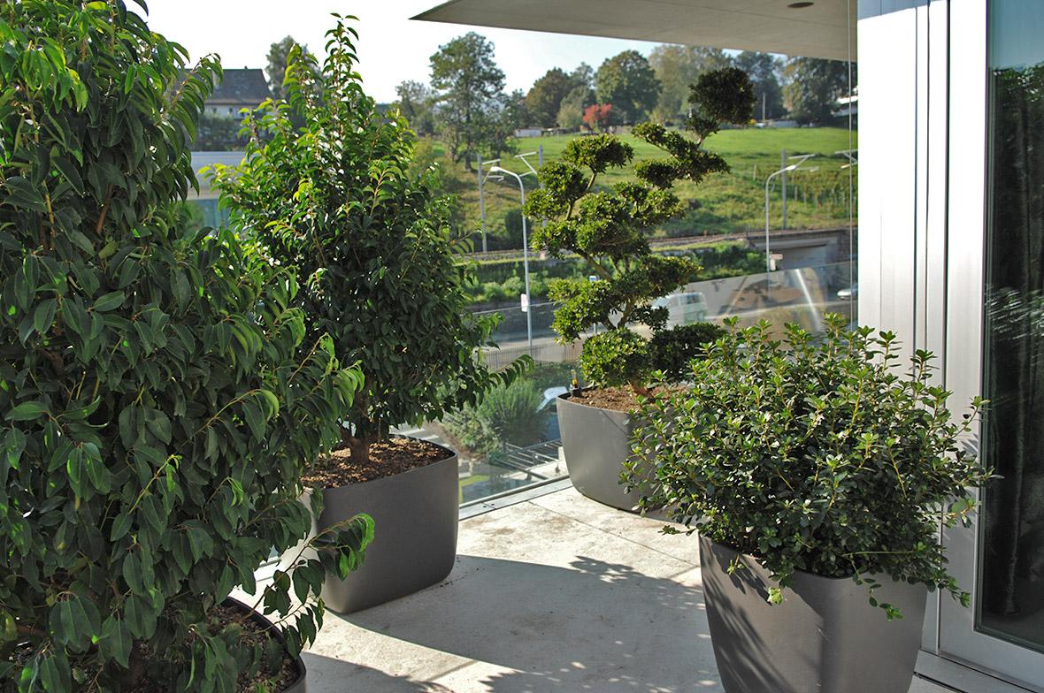 wuhrmann garten terrassenbepflanzung 0034w
