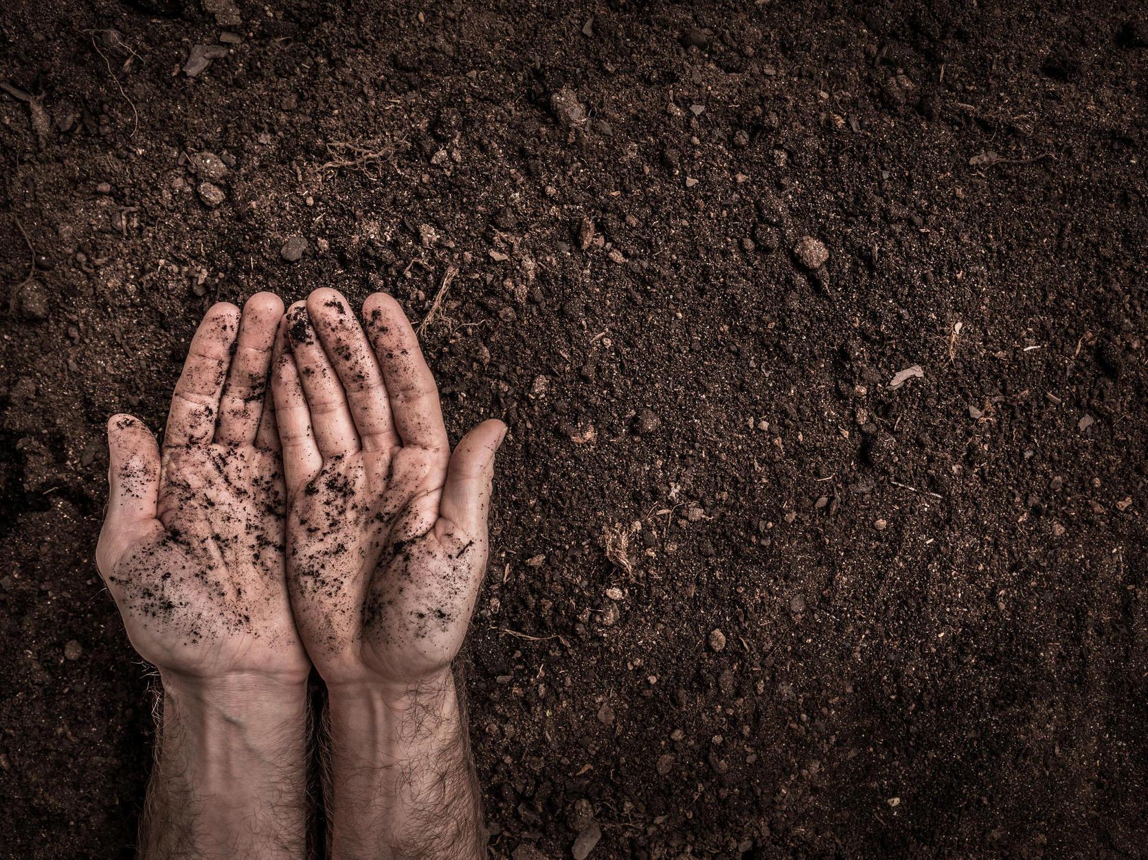 blumenerde damit pflanzen gut gedeihen ist richtige blumenerde entscheidend