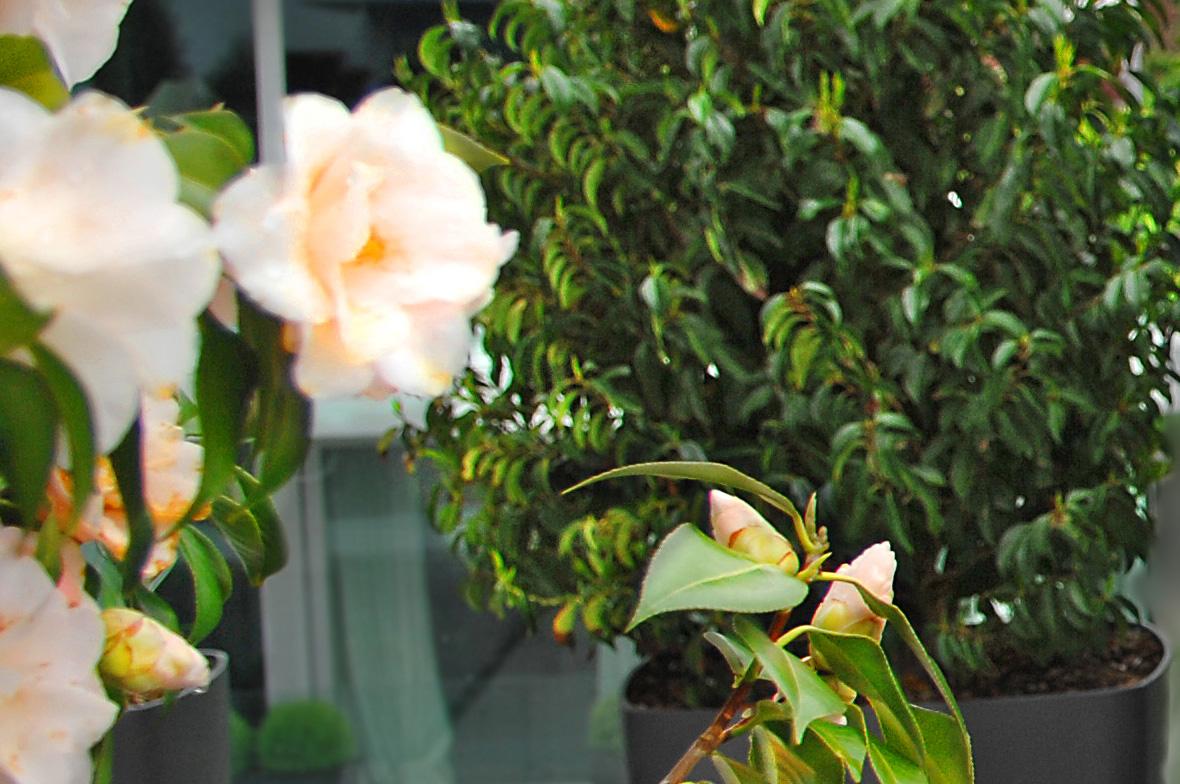 wuhrmann garten terrassenbepflanzung 3wwy
