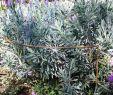 Terrassengestaltung Ideen Pflanzen Genial Pflanzenstützen Border Restraints Rust