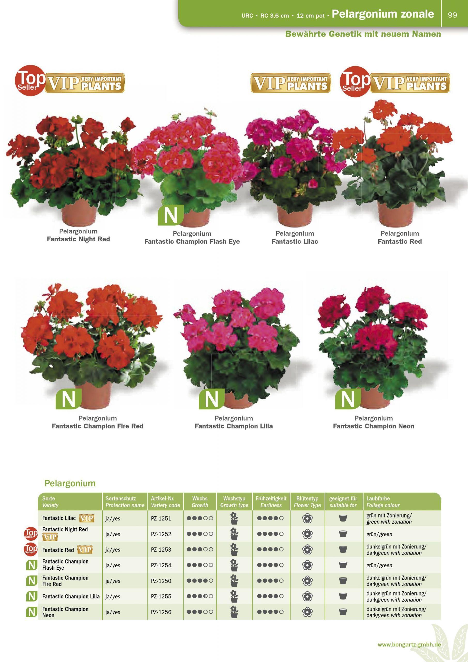 Terrassengestaltung Mit Pflanzen Schön Bongartz Katalog 17 18 Pages 101 148 Text Version