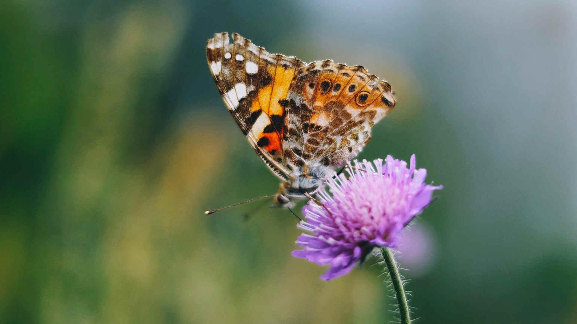 Insektenschtz Schmetterling c Svenja Kabelitz WWF