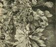 Tipps Für Gartengestaltung Schön Cr Xi Stockfotos & Cr Xi Bilder Alamy