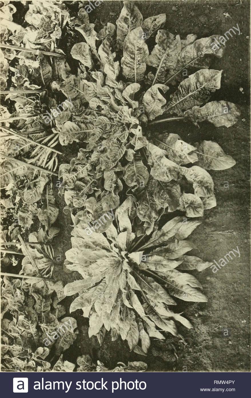 annales du jardin botanique de buitenzorg pflanzen pflanzen indonesien ann du jardin de integriert enzor 25er vo xi pl xxix ct3 cr co ctj e 00 o f c3c o 03 co von t o c heuotvpie lvan leerac amsterdam bitte beachten sie dass se bilder sind von der gescannten seite bilder digital fur lesbarkeit verbessert haben mogen farbung und aussehen ser abbildungen konnen nicht perfekt dem original ahneln extrahiert kebun raya in indonesien leiden etc e j brill etc rmw4py