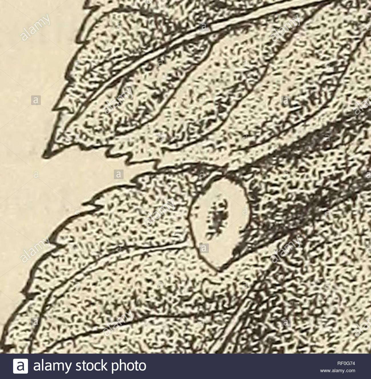 katalog von milford baumschulen fur herbst 1890 baumschulen gartenbau delaware milford kataloge obstbaume obst samlinge samlinge kataloge kataloge 4 aprikosen kki uckl grosse ahnlich dem pfirsich mit glatten stein wertvolle forearliness es erfordert uber gleiche behandlung wie pflaumen nektarinen und brugnolen baren gehen xi kulturen unter gunstigen umstanden preise je 30 cenis 2 50 er10 juni gesprosst 2 pro dutzend 12 pro 100 fruhe golden kleine rundliche farbe orange fleisch gelb jucy und suss trennt von der steinzeit golden drop gute grosse leuchtend orange und cr rf0g74