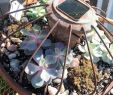 Upcycling Gartendeko Schön 48 New Succulent Rock Garden Alexstand