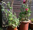 Upcycling Ideen Garten Frisch Chimney Pot Planters Upcycling Ideas for Your Garden